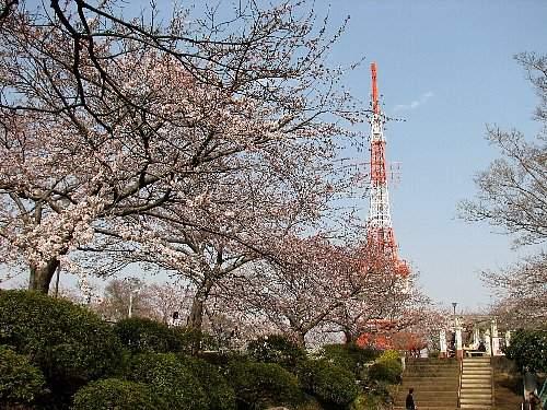 Sakuras_1